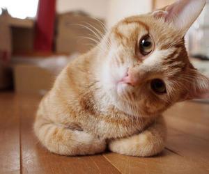 cat, eyes, and orange cat image