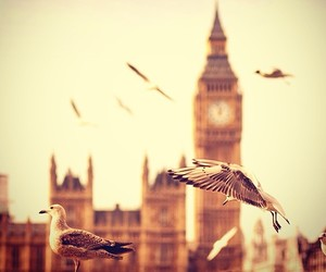 london and bird image