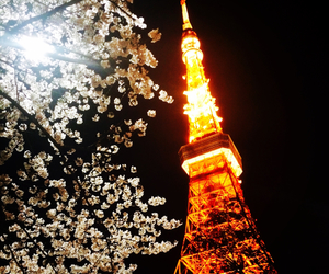 tokyo, cerry blossoms, and cheeryblossoms image