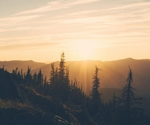 forest, sun, and sunset image