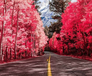 beautiful, photography, and road image