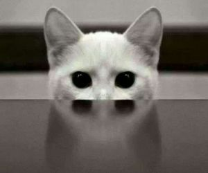 cat, eyes, and black and white image