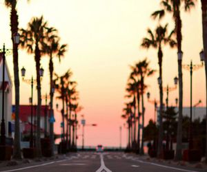 palm trees, road, and summer image