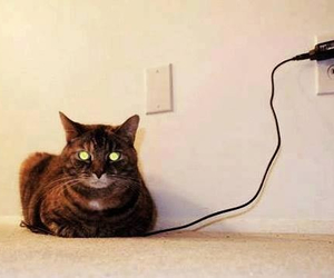 cat, funny, and charge image