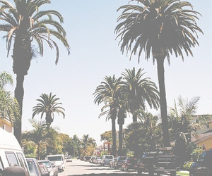 summer, california, and palms image