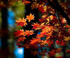 autumn, tree, and warm image