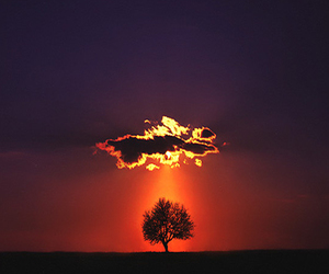 tree, clouds, and nature image