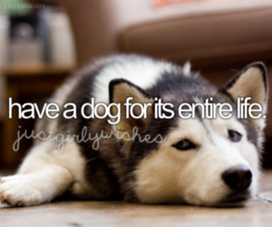 dog, bucket list, and puppy image