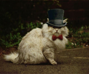 cat, hat, and top hat image