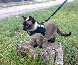 cat, cute, and fbi image