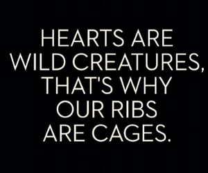 quotes, wild, and heart image