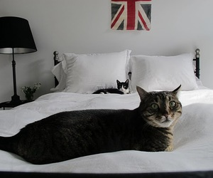 cats and flag bed image