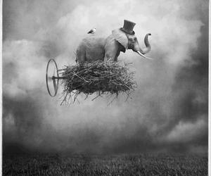 elephant, black and white, and fly image