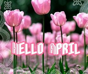 april, blossom, and flowers image