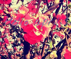 april, flower power, and pink image