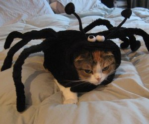 animals, spider, and cute image