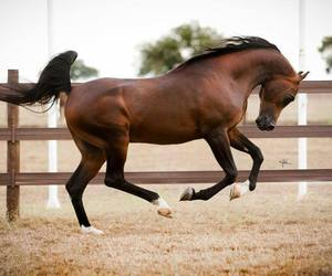 horse riding image