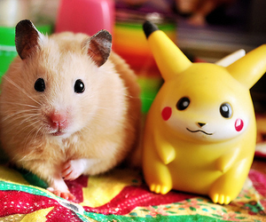 cute, pikachu, and hamster image