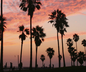 palmtrees, summer, and tumblr image