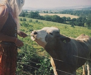 cow and woman image