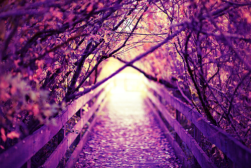 Purple Forest Discovered By Ashley On We Heart It