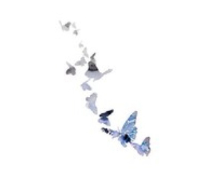 butterfly, overlays, and fly image