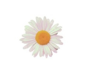 daisy, flower, and overlay image