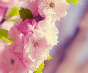 cherry, spring, and pink image