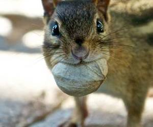 cute animals and squirrels image