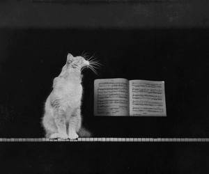 cat and dreams image
