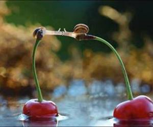 snail, cherry, and kiss image