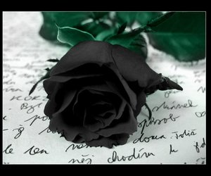 beautiful, black and white, and rose image