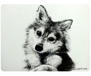 art, blackandwhite, and dog image