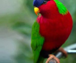 bird, spring, and colorous image