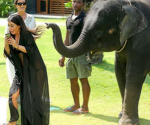 animals, awesome, and elephants image