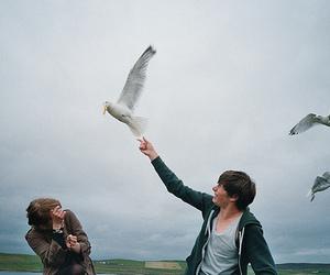 bird, boy, and photography image