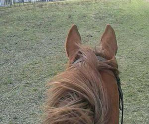 chestnut, horses, and riding image