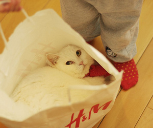 bag, kitty, and cat image
