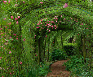 green, flowers, and garden image