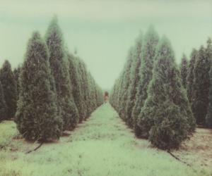 analog, grunge, and photography image