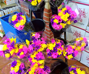flower, pretty, and purple image
