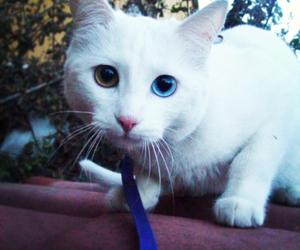 animals, beautiful, and blue eye image