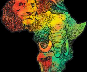 elephant, lion, and orangutan image