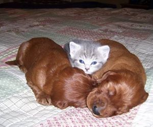 cat, animal, and puppy image