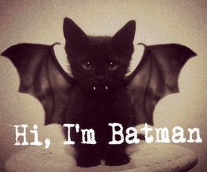 batman, cat, and cute image