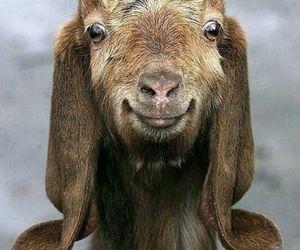 goat, animal, and happy image