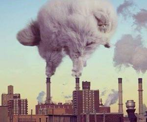 cat, funny, and smoke image
