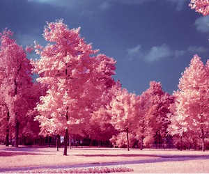 pink, tree, and pretty image