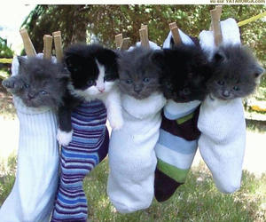 cats, small, and socks image