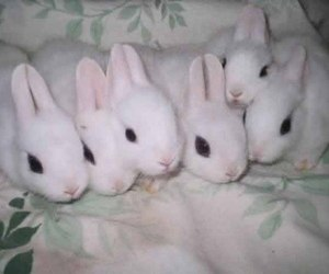 cute, bunny, and pale image